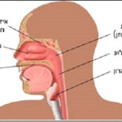 מבנה ותפקוד האף
